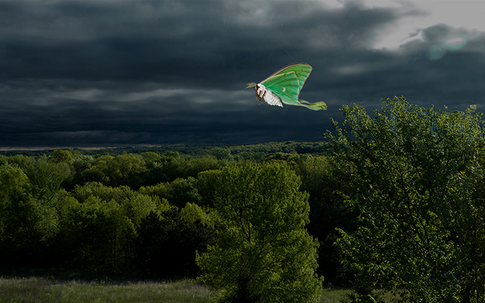 Storm Over Luna Green
